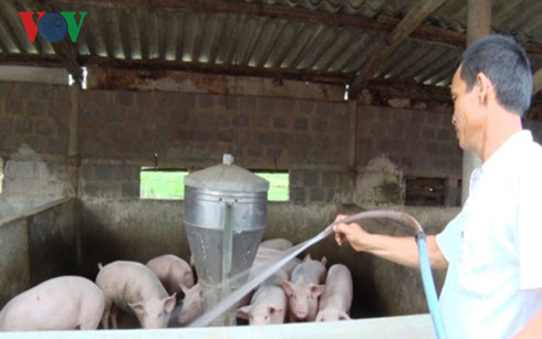 Để chăn nuôi lợn phát triển bền vững (3/3/2017)