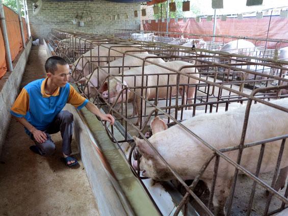 Thái Nguyên: Bài học phát triển bền vững trong chăn nuôi (28/5/2017)
