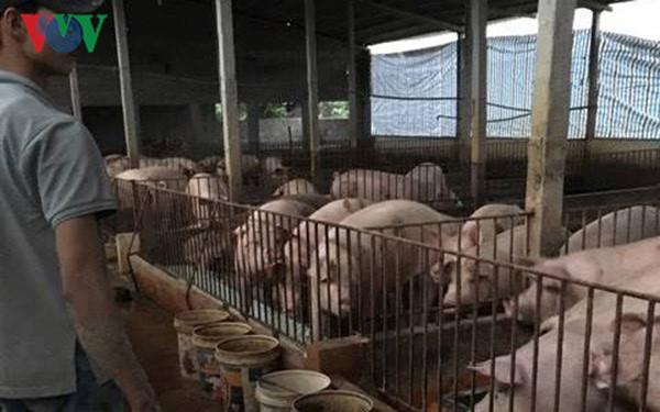 Giải cứu thịt lợn hơi và bài toán xuất khẩu (9/5/2017)