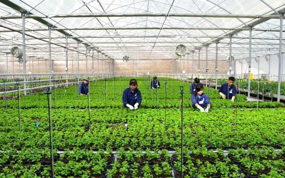 Sản xuất nông nghiệp sạch - hướng phát triển bền vững (1/6/2017)