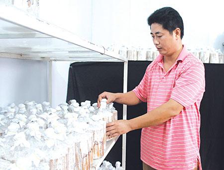 Nguyễn Xuân Kiên và hành trình đưa thương hiệu nấm Việt ra thế giới (22/8/2017)