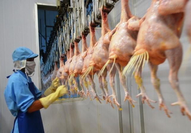 Ngày mai, tại Long An, Bộ Nông nghiệp và Phát triển nông thôn sẽ tổ chức xuất lô gà thịt chế biến đầu tiên sang thị trường Nhật Bản, thông qua cảng biển quốc tế Long An (8/9/2017)