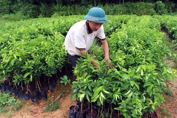 Xã hội hóa để chủ động nguồn giống cây trồng chất lượng  (09/9/2017)