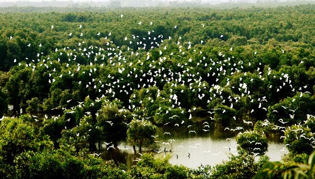 Kết quả hình ảnh cho Vườn quốc gia Tràm Chim, Đồng Tháp