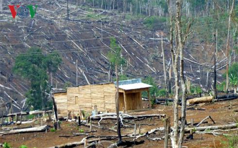 Tốc độ mất rừng ở Đăk Nông nhanh nhất Nam Trung bộ và Tây Nguyên (Thời sự đêm 28/9/2017)