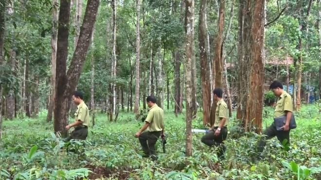 Nâng cao hiệu quả bảo vệ rừng phòng hộ ở nước ta  (15/01/2018)
