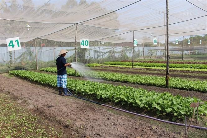 Nông nghiệp hữu cơ: Liên kết sản xuất để phát triển thị trường ổn định (7/1/2018)