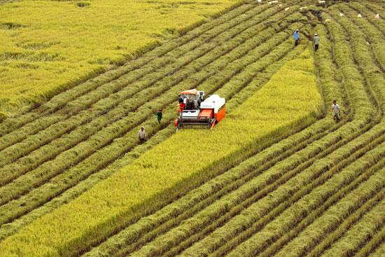 Năm 2018: Khuyến khích tập trung, tích tụ ruộng đất để sản xuất, kinh doanh tập trung quy mô lớn, nông nghiệp công nghệ cao (11/1/2018)