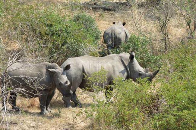 Nhóm phụ nữ bảo vệ động vật hoang dã tại Nam Phi (5/9/2018)