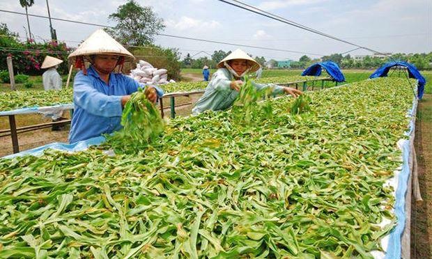 Phát triển nền dược liệu sạch của Việt Nam (18/10/2018)