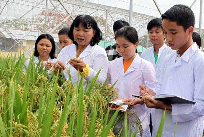 """""""Mẹ đẻ"""" của những giống lúa thích ứng với đồng bằng sông Cửu Long (29/10/2018)"""