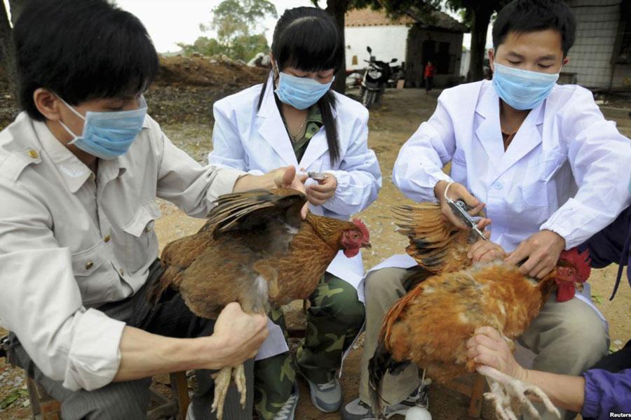 Tăng cường phòng dịch bệnh cúm gia cầm vụ Thu Đông (19/10/2018)