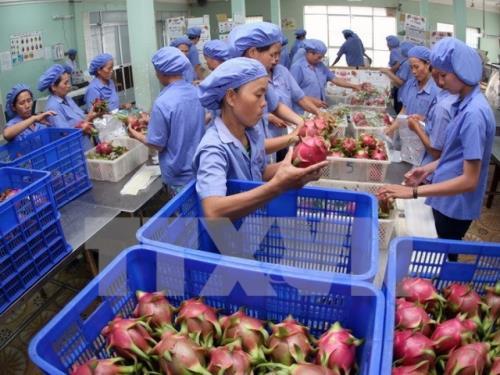 Phát triển công nghệ chế biến giúp tăng giá trị nông sản (9/11/2018)