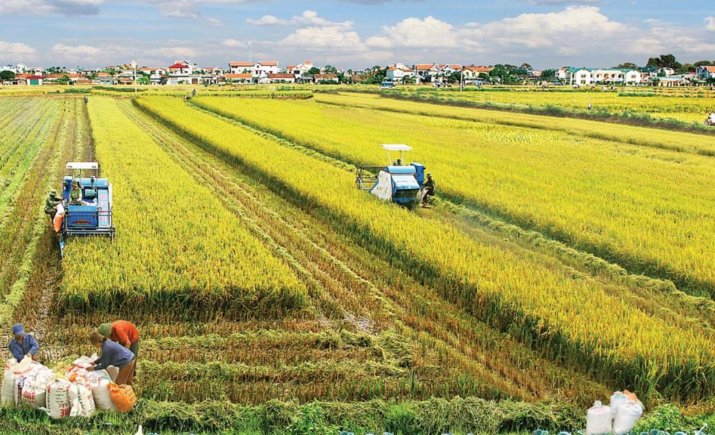 Tích tụ đất nông nghiệp - Cần sửa đổi Luật Đất đai 2013 (14/11/2018)