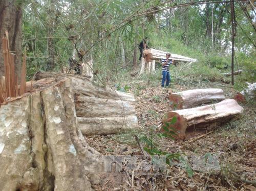Khó giám định thiệt hại và xử lý trách nhiệm trong những sai phạm của các Ban quản lý rừng tỉnh Gia Lai (Thời sự đêm 12/11/2018)