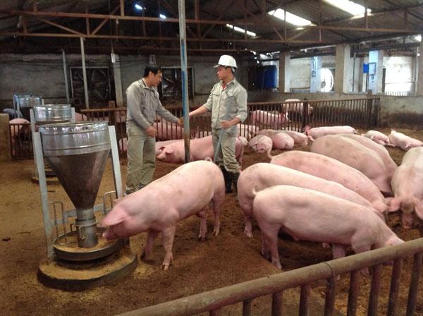 Tăng cường công tác an toàn dịch bệnh hướng tới chăn nuôi bền vững (23/11/2018)