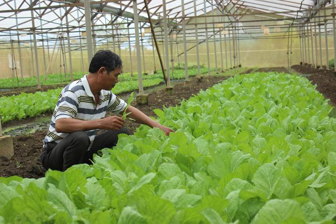 Hạn chế sử dụng thuốc bảo vệ thực vật- hướng đến sản xuất an toàn (7/11/2018)