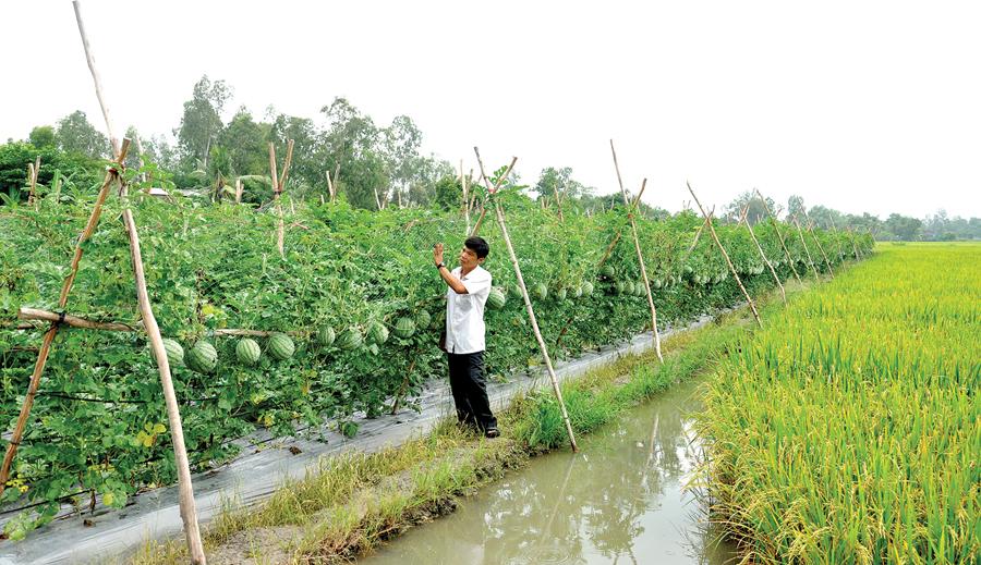 Chuyển đổi cơ cấu sản xuất nông nghiệp thích ứng với biến đổi khí hậu (14/11/2018)