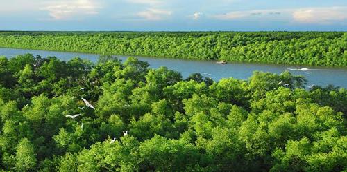 Phát triển rừng bền vững trong bối cảnh biến đổi khí hậu (21/11/2018)