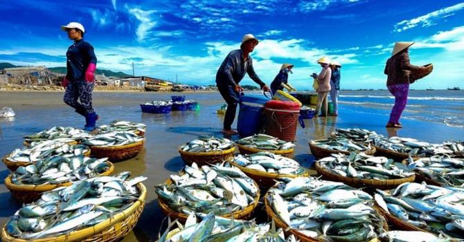 Suy giảm nguồn lợi: Thách thức lớn cho ngành khai thác thủy sản Việt Nam (8/11/2018)