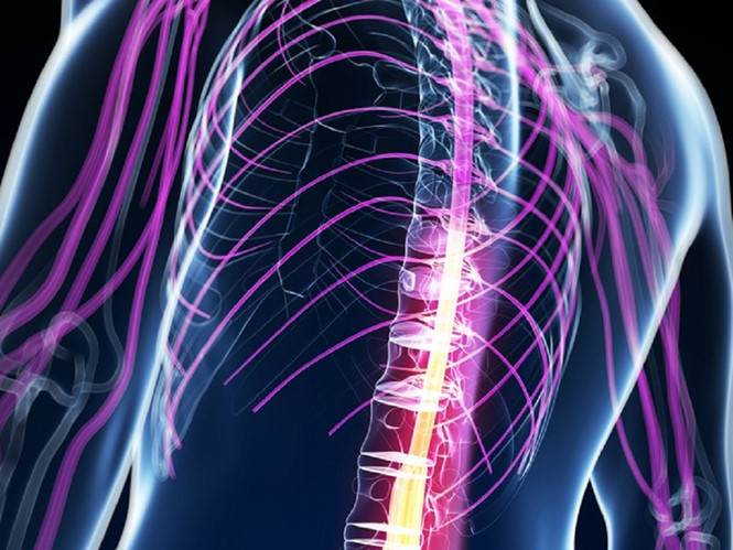 Phương pháp chữa trị mới mở ra cơ hội giúp bệnh nhân bị liệt hai chân do tổn thương tủy sống có thể đi lại được (7/11/2018)