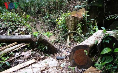 Các Ban quản lý đang giữ rừng hay xâm chiếm đất rừng, tham nhũng chính sách bảo vệ rừng? (7/11/2018)