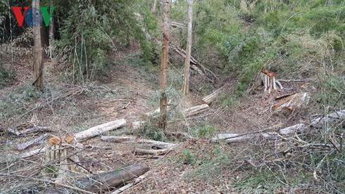Hai điều không thể chấp nhận được trong quản lý, bảo vệ rừng (12/11/2018)