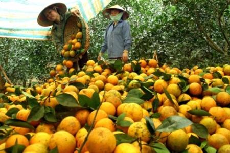 Dự án khởi nghiệp cam Cao Phong – 3T Farm (23/12/2018)