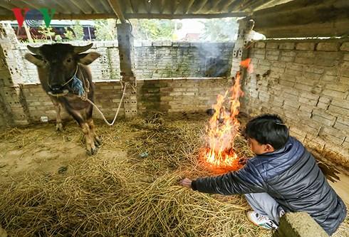 Phòng chống rét cho gia súc: Khuyến cáo từ các ban ngành chức năng (2/2/2018)