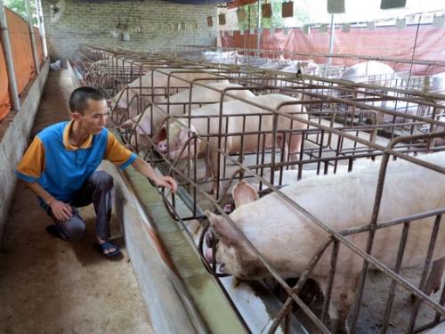 Cơ hội và thách thức đối với ngành chăn nuôi Việt Nam khi Hiệp định CPTPP chính thức có hiệu lực  (24/3/2018)