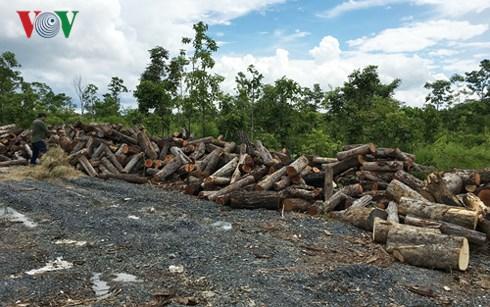 Đắk Lắk: Nóng chuyện phá rừng, trách nhiệm thuộc về ai? (5/3/2018)
