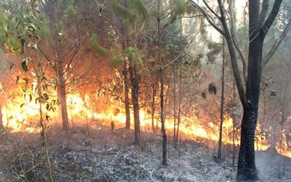 Các địa phương cần khẩn trương xây dựng phương án phòng chống cháy rừng, khi nắng nóng và khô hạn đang diễn biến phức tạp. Chỉ trong ngày hôm nay cả nước xảy ra 2 vụ cháy rừng (Thời sự đêm 9/4/2018)