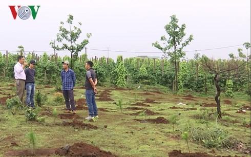 Gia Lai: Hàng chục nghìn mét vuông đất rừng bỗng nhiên bị hô biến thành đất…cán bộ (13/4/2018)