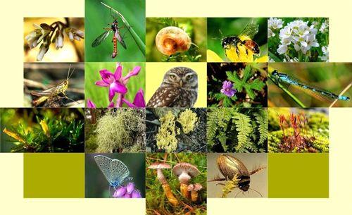 25 năm đồng hành Công ước đa dạng sinh học - vẫn còn nhiều việc phải làm (24/5/2018)