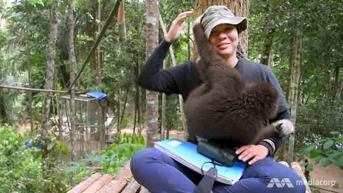 Người phụ nữ nỗ lực giải cứu và ngăn chặn nạn săn bắt trái phép linh trưởng làm vật nuôi ở Malaysia (21/5/2018)