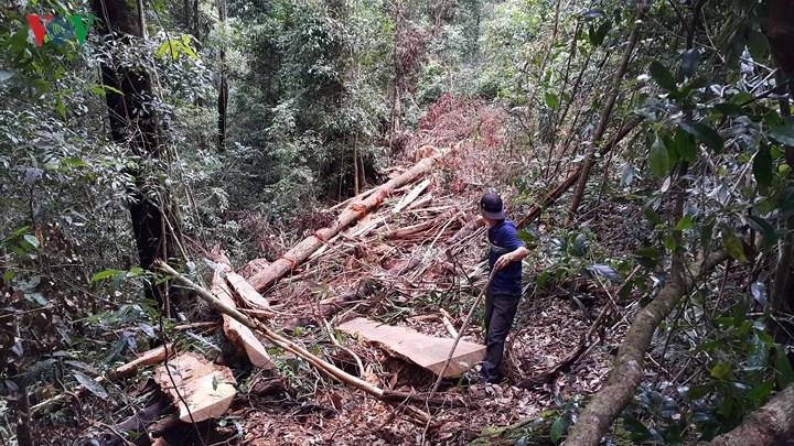 """Lại xảy ra tình trạng phá rừng ở xã Đăk Rơ Nga, huyện Đăk Tô – nơi được mệnh danh là """"giữ rừng tốt nhất Kon Tum"""" (29/5/2018)"""