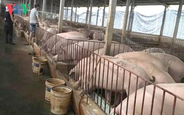 Giá lợn hơi tăng mạnh: Vai trò cơ quan quản lý ra sao khi để thị trường liên tục sốt nóng, sốt lạnh? (31/5/2018)