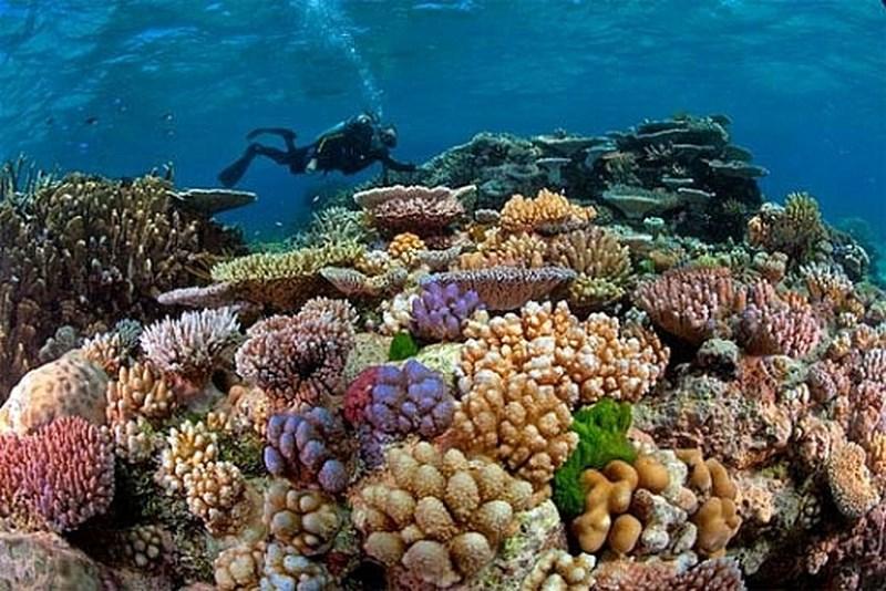Nhiều khó khăn trong công tác bảo tồn biển (27/5/2018)