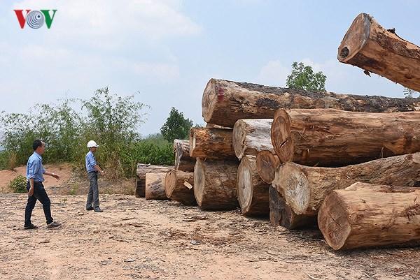 Khai thác gỗ trái phép nghiêm trọng tại xã Đăk Rơ Nga, lâm phần Công ty Trách nhiệm hữu hạn một thành viên lâm nghiệp Đăk Tô (huyện Đăk Tô), tỉnh Kon Tum (9:02 giây)
