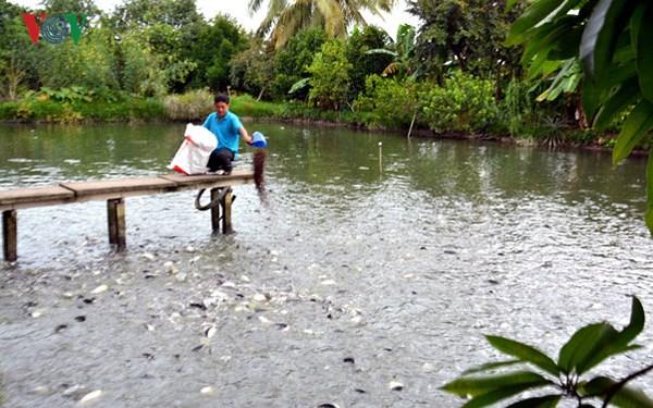 Nông dân thu tiền tỷ nhờ nuôi cá nước ngọt (3/5/2018)