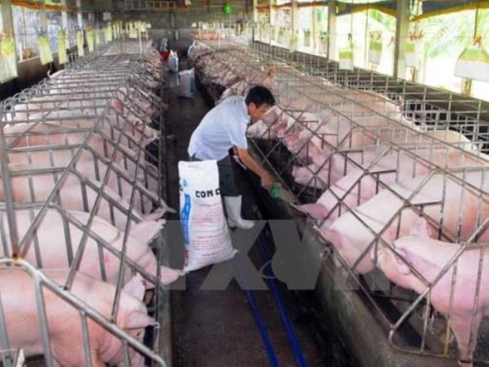 Chất lượng con giống, yếu tố quan trọng giúp ngành chăn nuôi phát triển bền vững (1/6/2018)