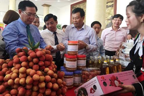 Kết nối thị trường tiêu thụ vải thiều Bắc Giang (13/6/2018)