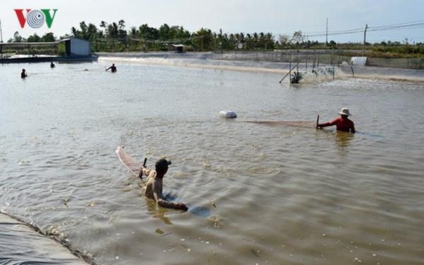 Nuôi tôm tiêu chuẩn VietGap, hướng đi bền vững ở Cà Mau (14/6/2018)