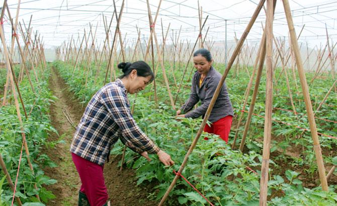 Tăng khả năng thích ứng cho cây trồng trước biến đổi khí hậu (4/7/2018)