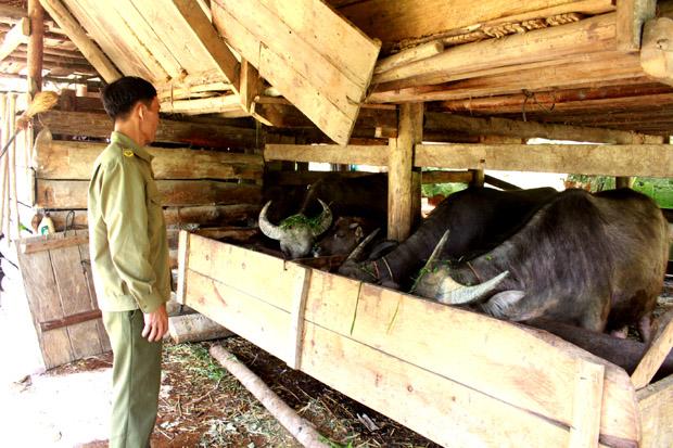 Chính sách phát triển chăn nuôi ở các huyện vùng cao Hà Giang (14/7/2018)