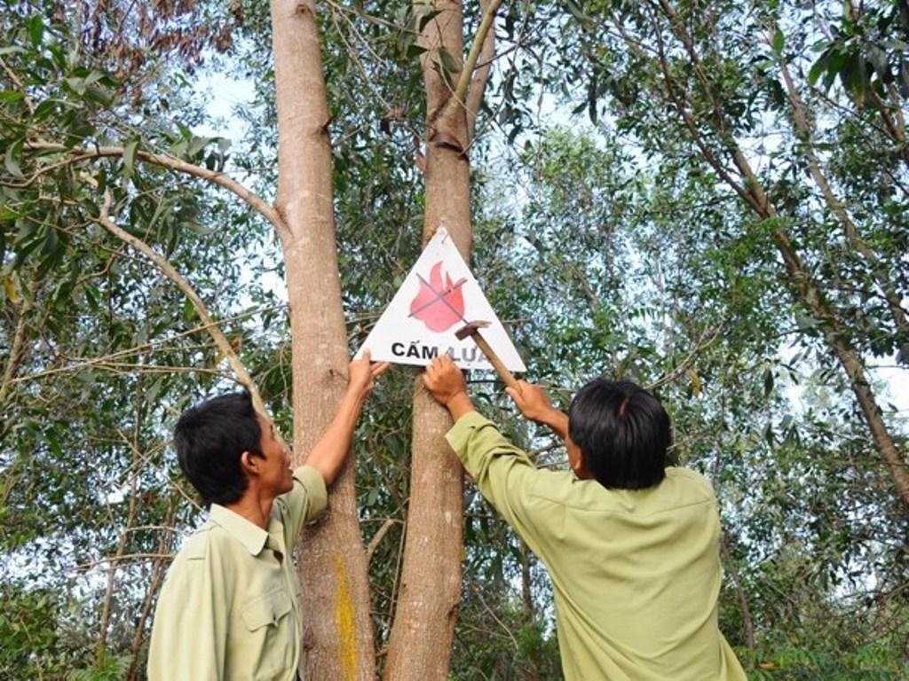 Các tỉnh miền Trung cần chủ động phòng, chống cháy rừng trong mùa nắng nóng (Thời sự đêm 1/7/2018)