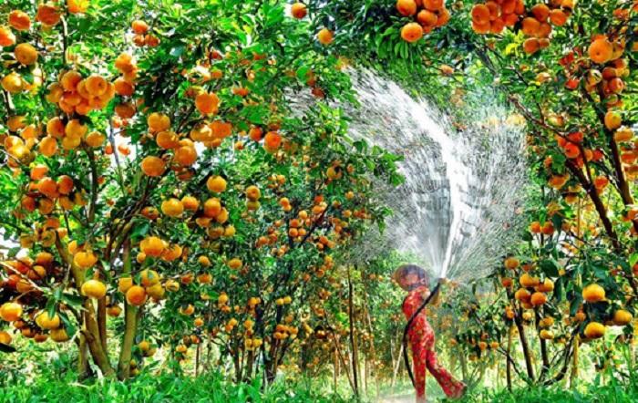Đồng bằng sông Cửu Long: Phát triển cây ăn quả hướng tới bền vững (15/7/2018)