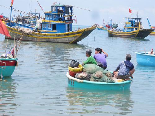 Nhức nhối tình trạng đánh bắt tận diệt ở Ninh Thuận (12/8/2018)