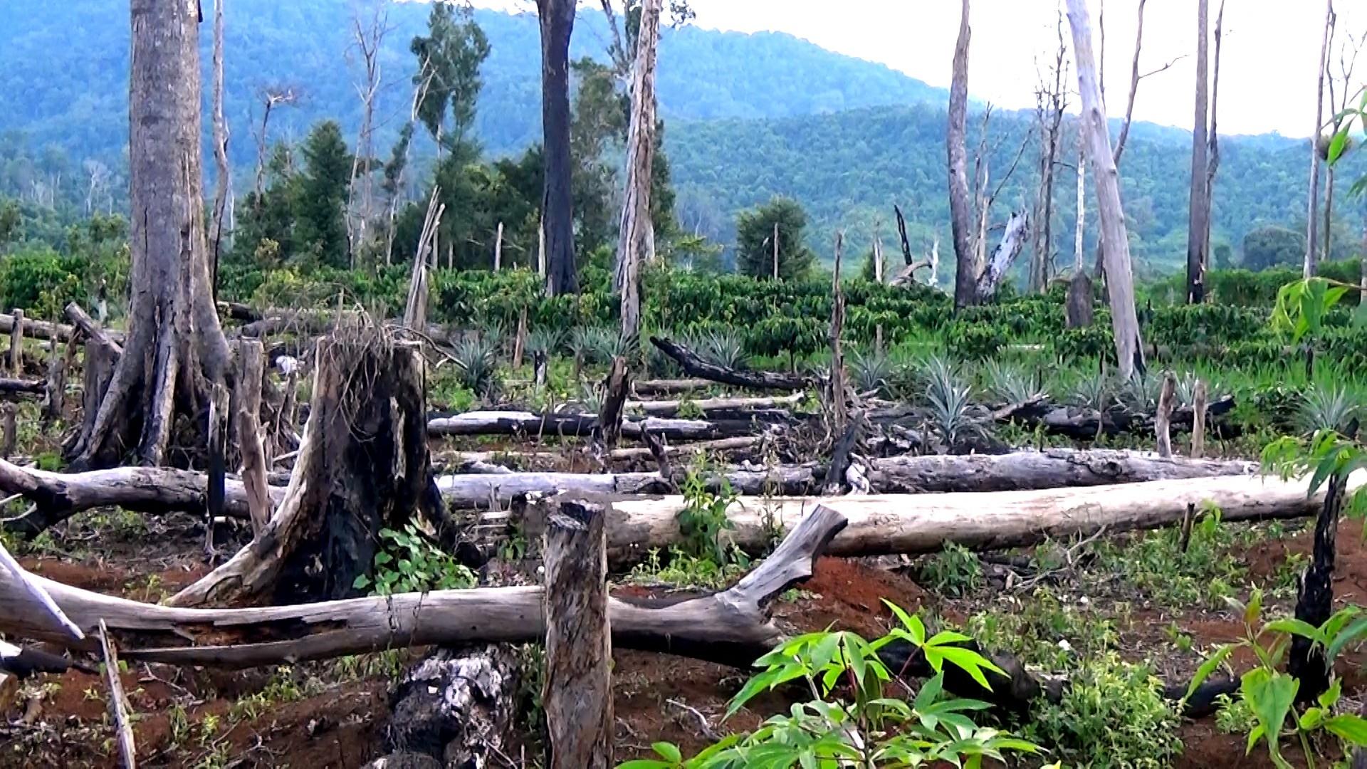 Phục hồi rừng tự nhiên - Đâu là giải pháp? (13/8/2018)