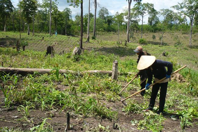 Hợp tác xã nông nghiệp ở Gia Lai, trở đi mắc vốn, trở lại mắc hạ tầng (12/8/2018)